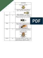 Drosophila_Melanogaste.docx