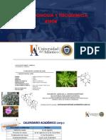 Unidad 3 Metabolitos Primarios (Lipidos) Farmacognosia y Fitoquimica
