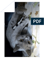 cat-nurses-pups-36