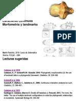Teo 10 Morfometria y Landmarks