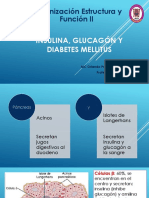 010_Insulina_glucagón_DM.pptx