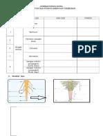lks struktur jaringan tumbuhan1.rtf
