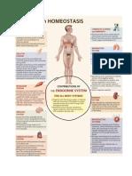 endocrie.pdf