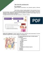 INFLAMACIÓN- PATOLOGÍA.pdf