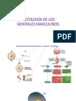 genitales masculinos histo.pdf