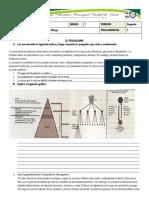 Evaluación feudalismo segundo periodo