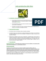 Circuito productivo del olivo