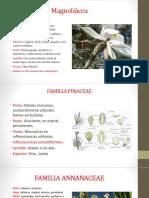 Familias de tipos de plantas