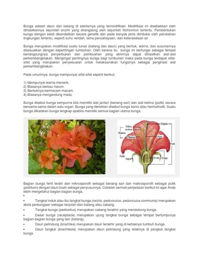 Bunga Adalah Daun Dan Batang Di Sekitarnya Yang Termodifikasi Docx