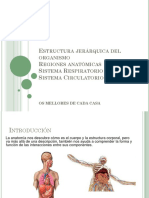 Estructura jerárquica del organismo.pptx