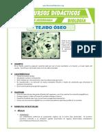 El-Tejido-Óseo-para-Tercero-de-Secundaria.pdf