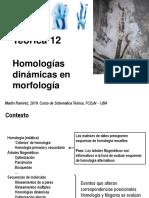 Teo 12 Homologias dinamicas en morfologia