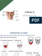 Cráneo II