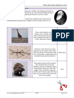 28757-plant-and-animal-adaptation-cards.docx