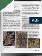 Div Vegetal Campbell.pdf