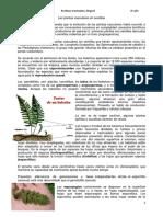 Las plantas vasculares sin semillas