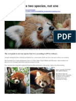 Red Pandas Are Two Species BBC 26 Feb 2020