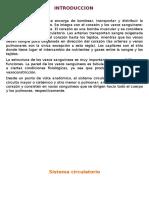 SISTEMA-DE-CIRCULACION-GRUPO