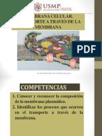 TEORIA 5 MEMBRANA $.pdf