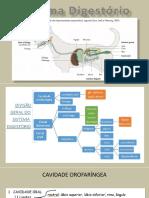 RESUMO Digestório19 (2).pdf