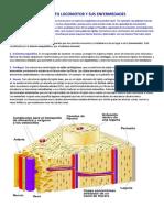 P1 - 2020 - OCTAVOS - EL APARATO LOCOMOTOR Y SUS ENFERMEDADES