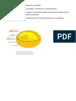 TALLER DE BIOLOGIA.docx
