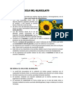 RESUMEN CICLO DEL GLIOXILATO.docx