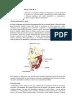 tumores cervicales