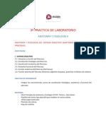 3a Práctica de Lab AyFII Sistema Digestivo Páncreas