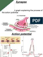 synapse-1214834359710231-8.pdf