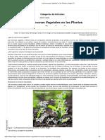 Las Hormonas Vegetales en las Plantas _ Intagri S.C_.pdf