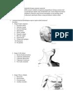 uts anatomi.docx