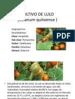 CULTIVO DE LULO.pptx