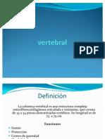 Anatomía de columna vertebral