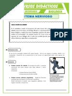 El-Sistema-Nervioso-para-Secundaria
