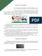 Animais ruminantes - Trabalho Ana Miguel