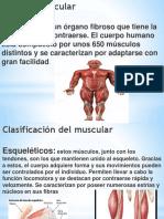 sistema MUSCULAR.pptx