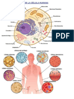 Células - imagen