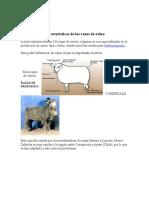 Caracteristicas+de+las+razas+de+ovino.makor (1)