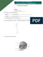 Cuestionario  Evaluación de Anatomía