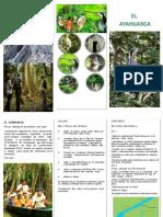triptico   reserva.pdf