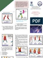 folleto corazon fetal  1