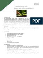 7-LABORATORIO HORMONAS VEGETALES