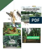 kegiatan capung dan konservasi