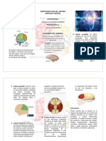actividad 5 morfofisiologia