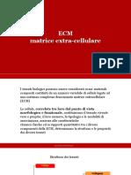 (3.3) ECM e pericardio