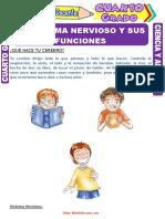 El-Sistema-Nervioso-y-sus-Funciones-para-Cuarto-Grado-de-Primaria