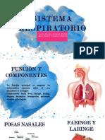 seminario de farmacognosia, sistema respiratorio