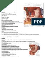 Esófago y Estómago