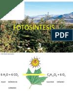 Fotosíntesis.pptx